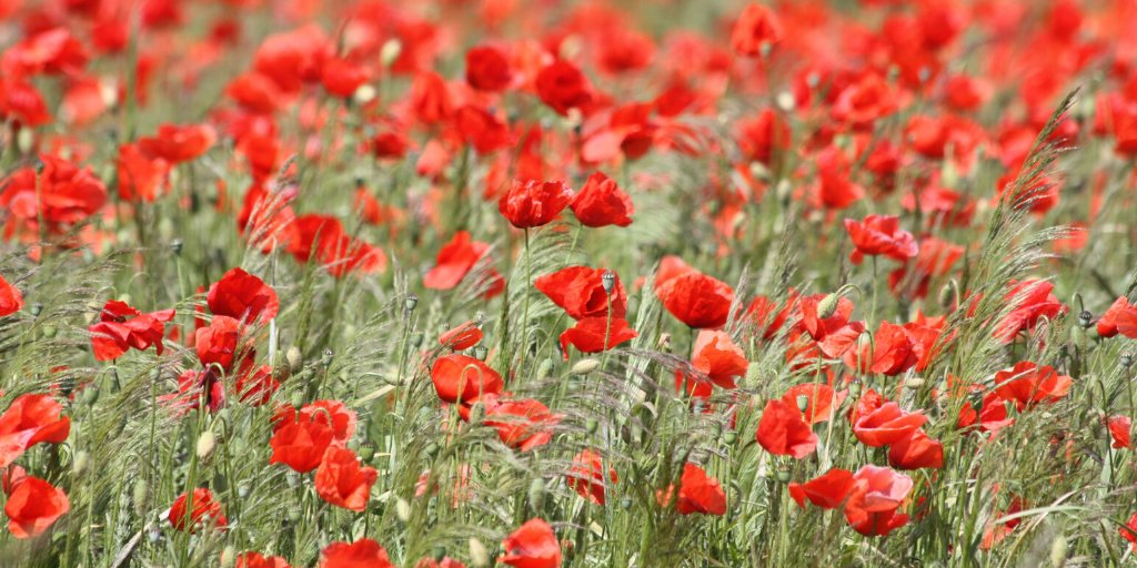 2019 events planned to remember Charnwood's War Heroes
